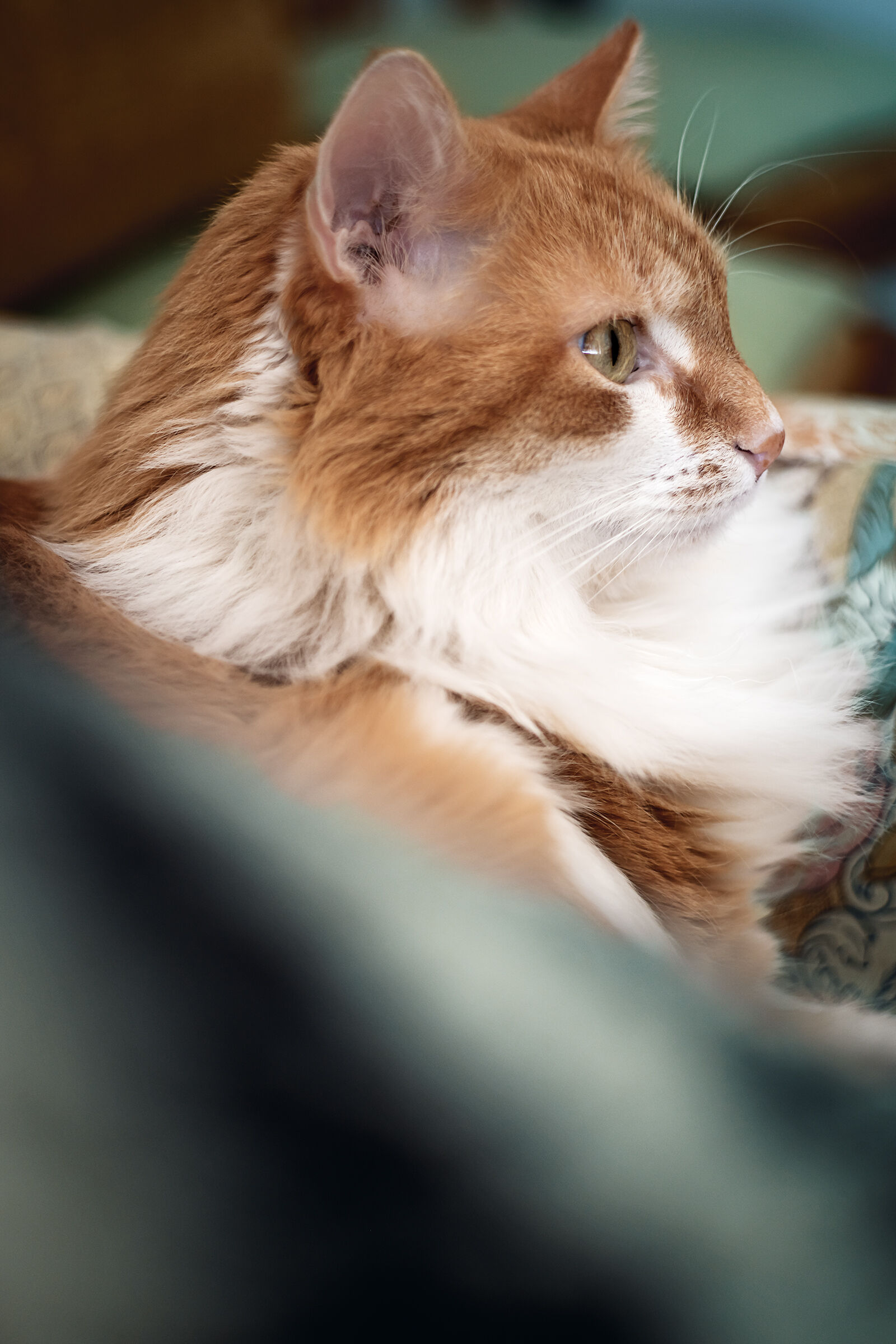 Profile of the furry man in the house! ...