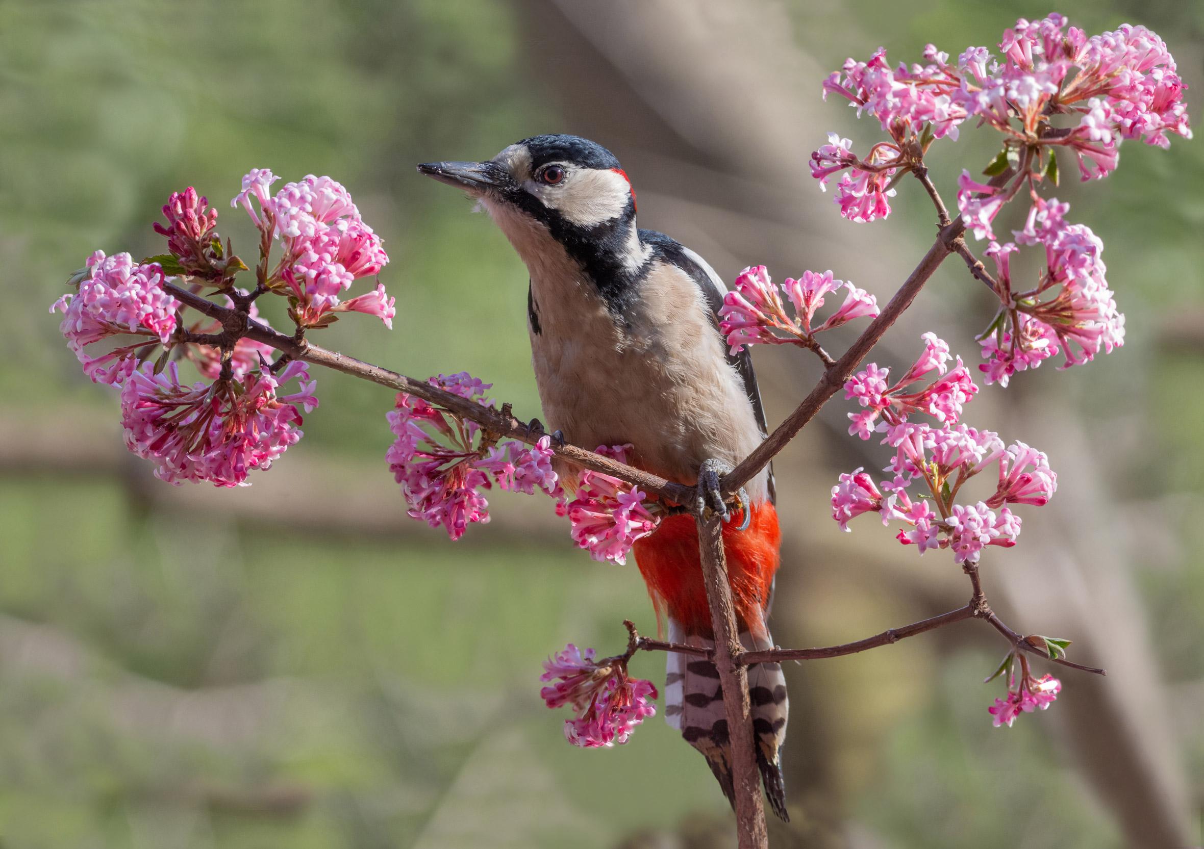 Bentornata primavera...
