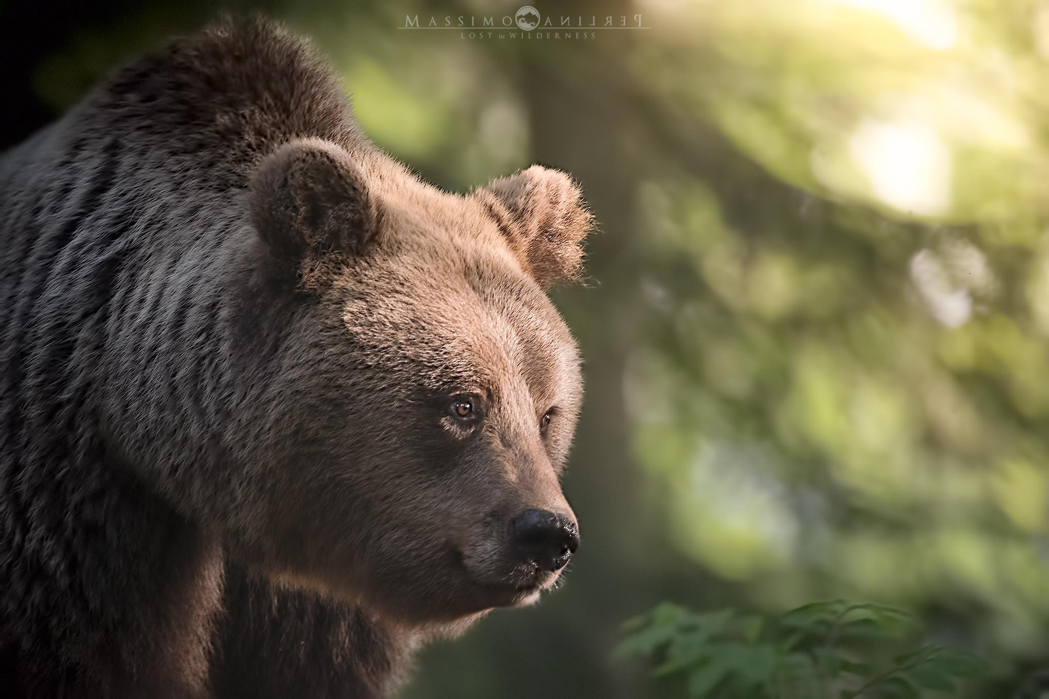Sonny the Bear...