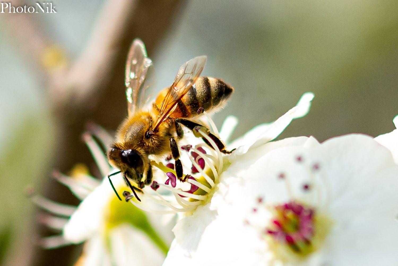 A caccia di polline...