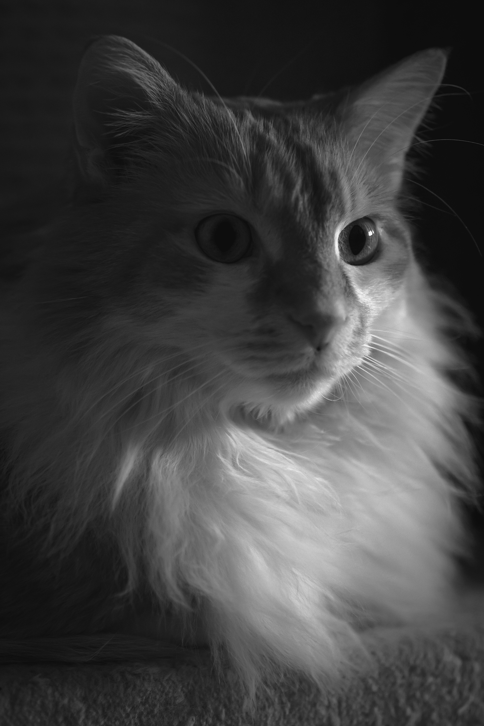 BW Macro Cat...