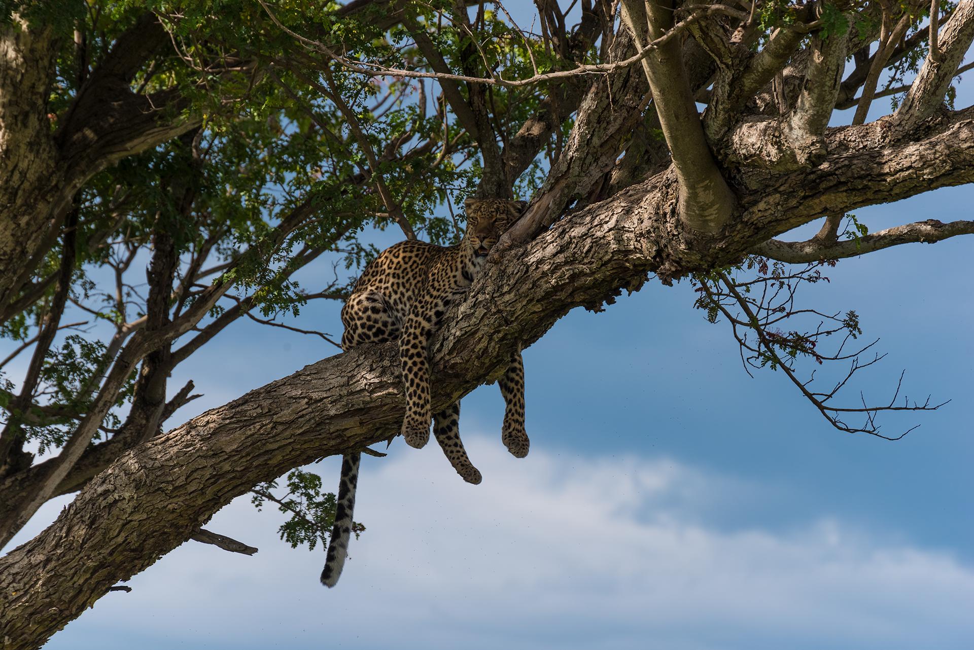 The Lonely Prince - Masai Mara  ...