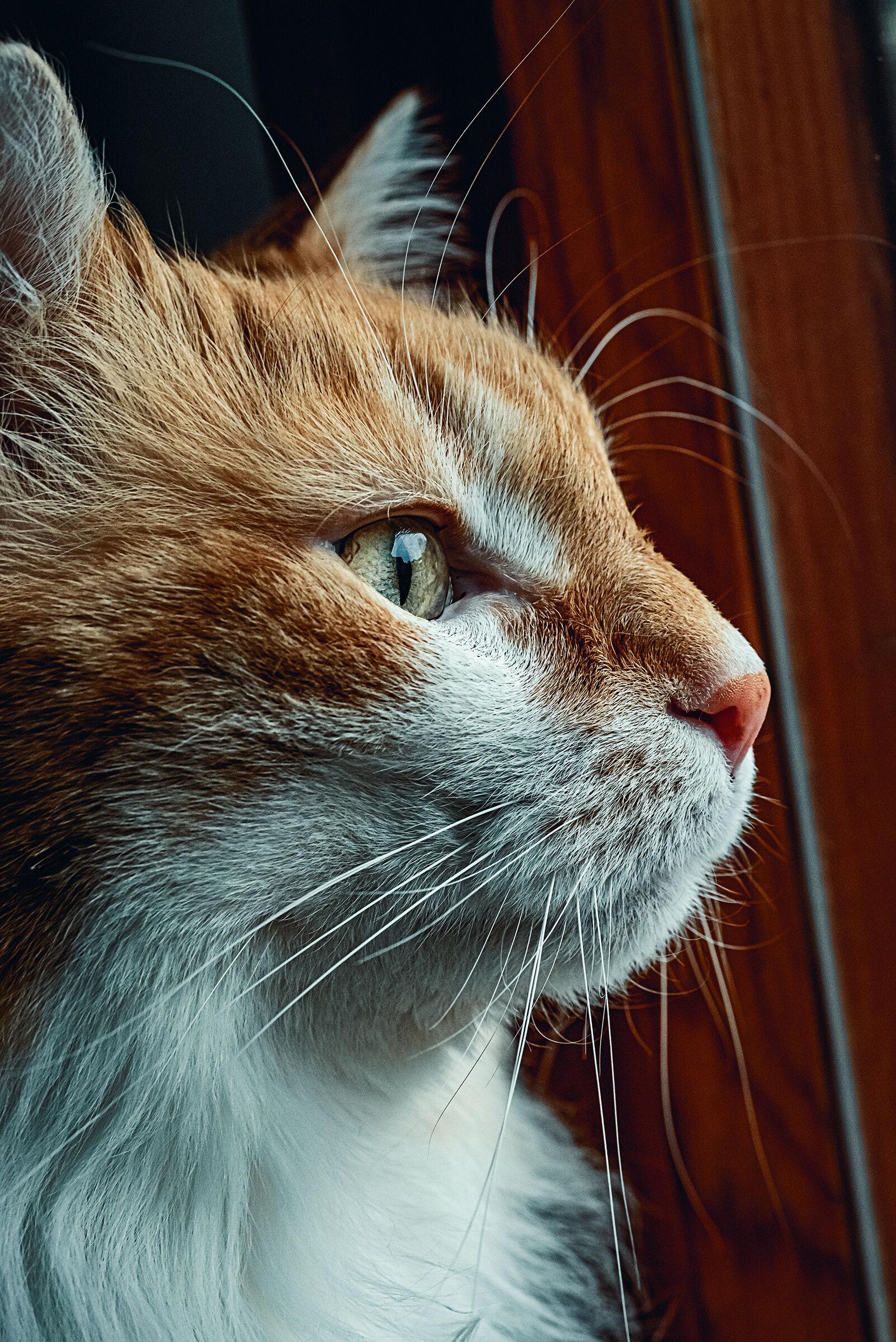 Feline beltade macro profile...
