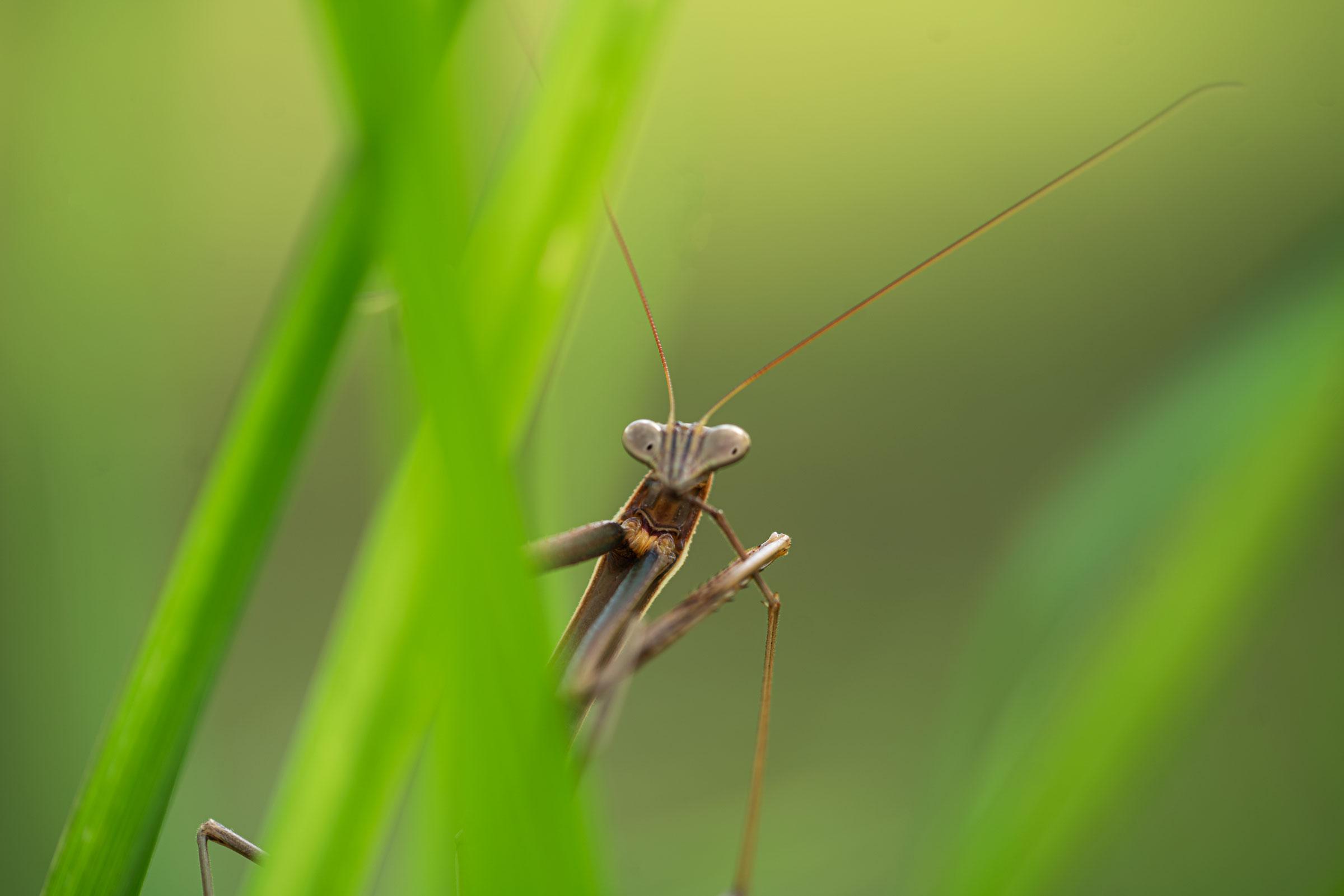 Religious mantis...