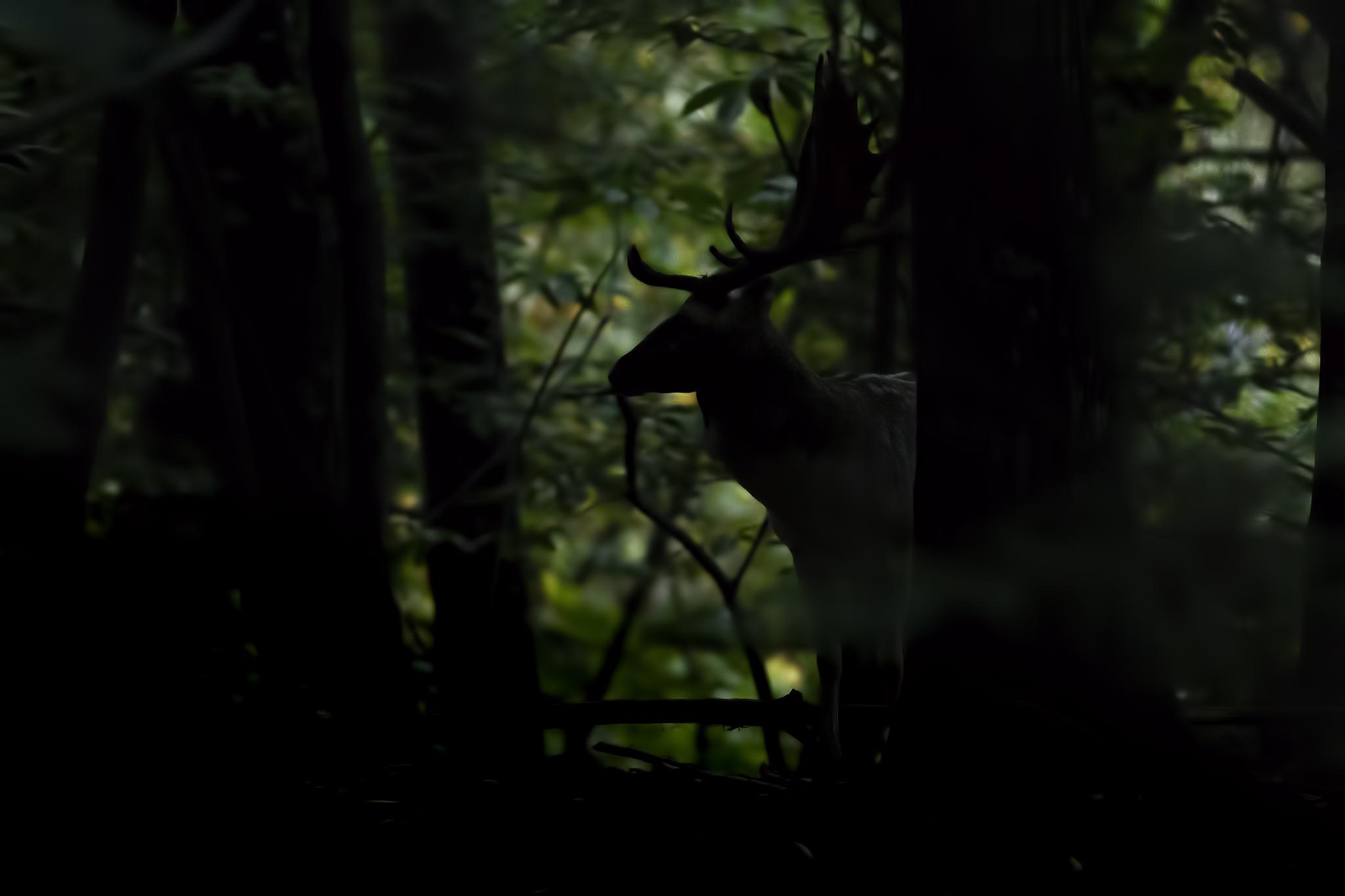 Sagome nella foresta...
