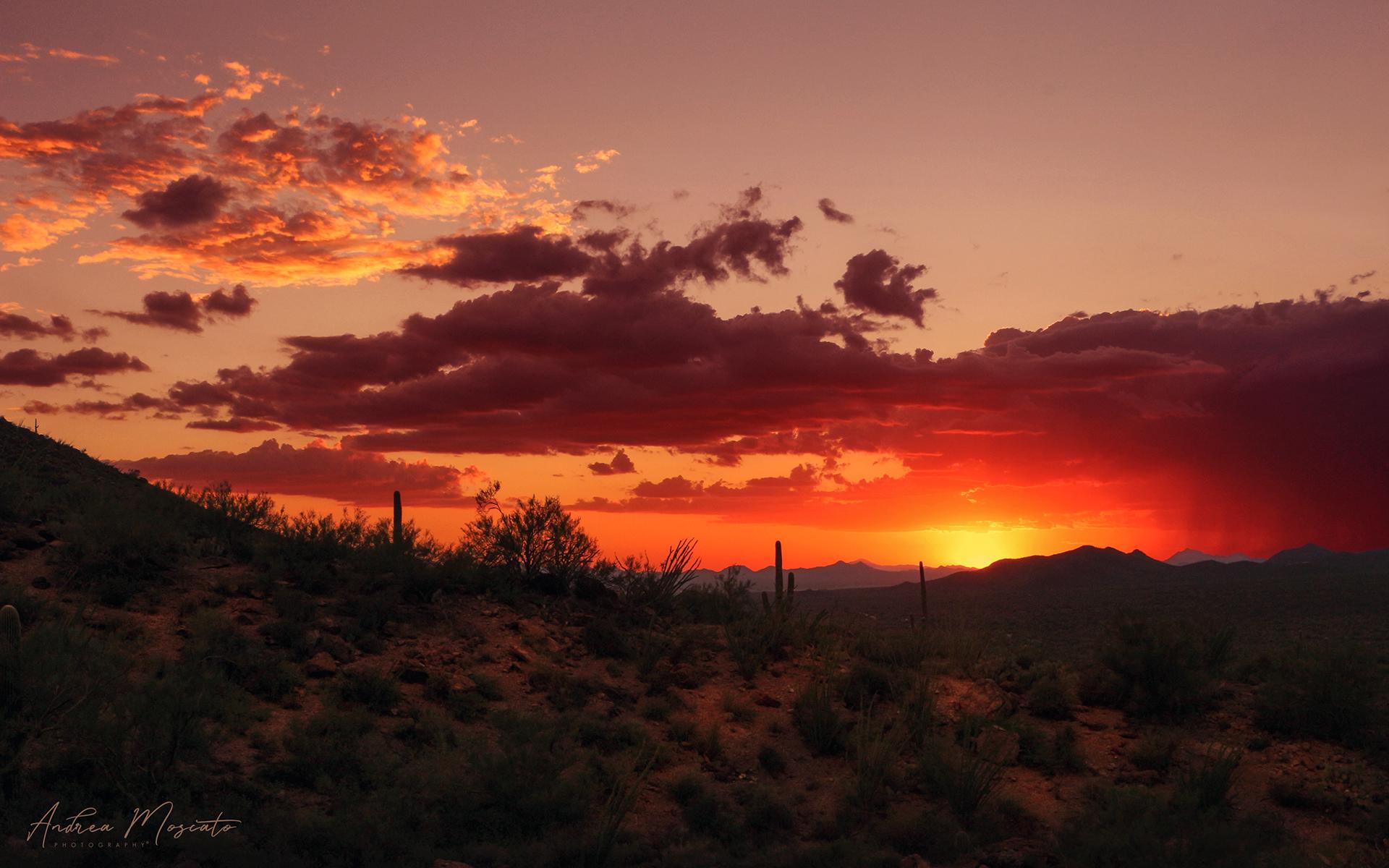 Saguaro National Park West - Arizona...