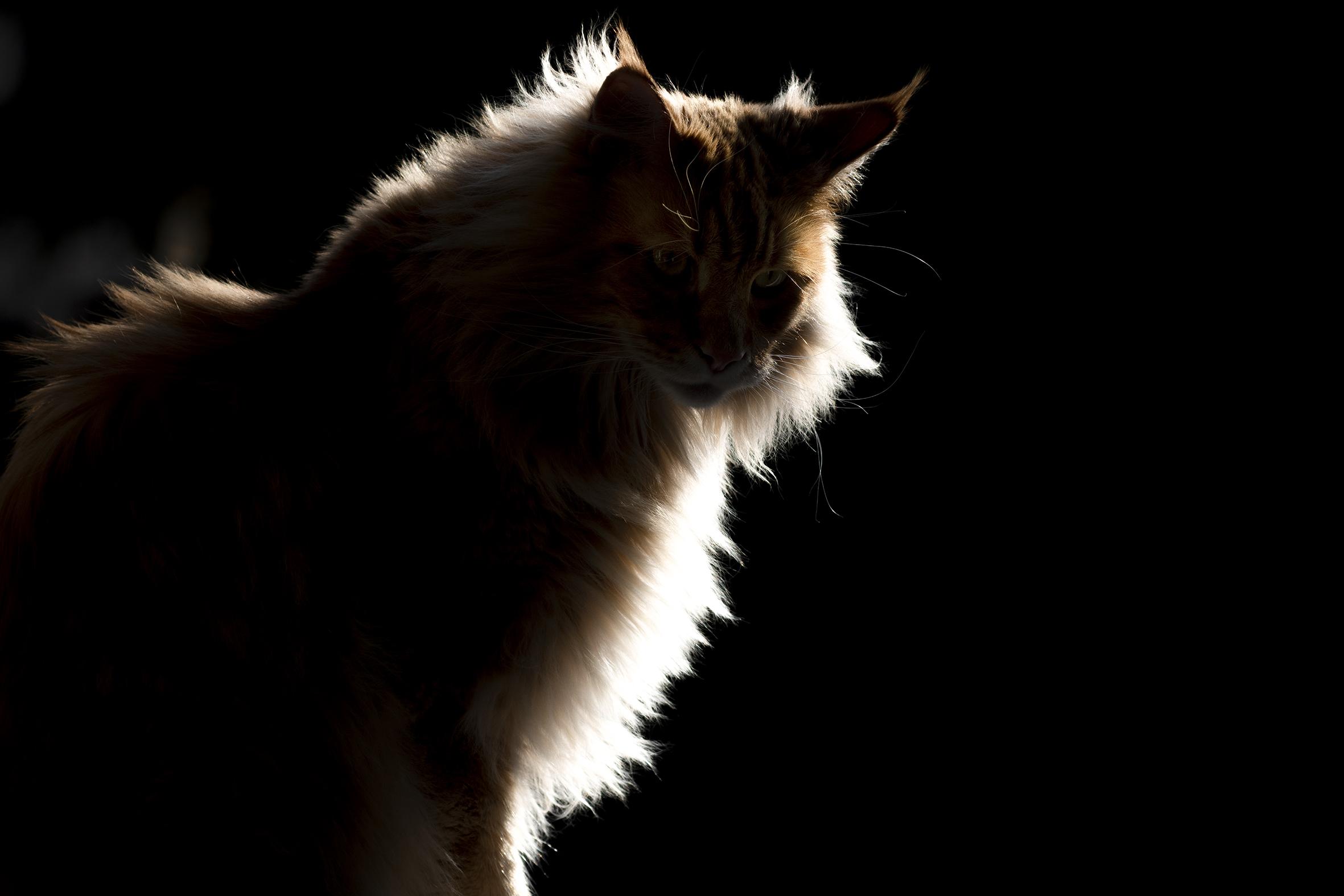 quarantined cat...