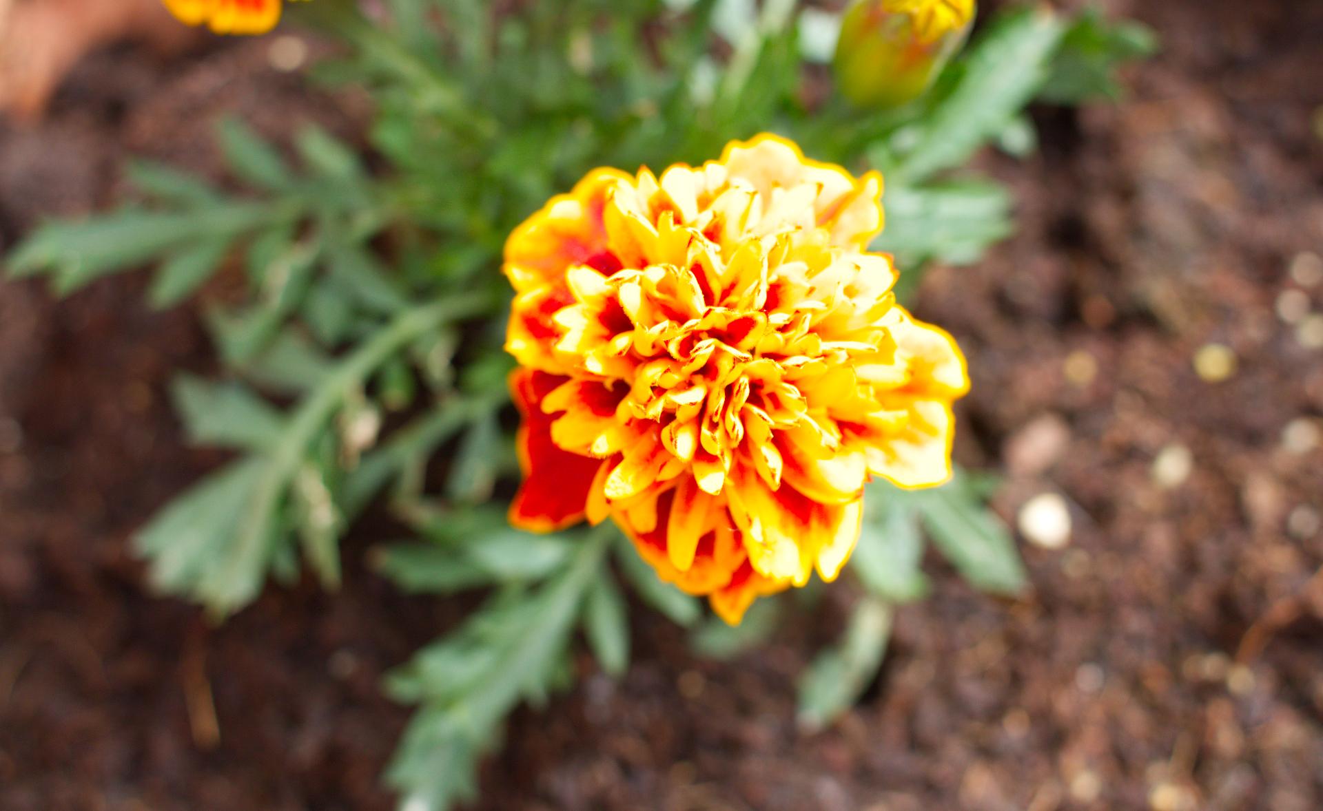 Arancione...