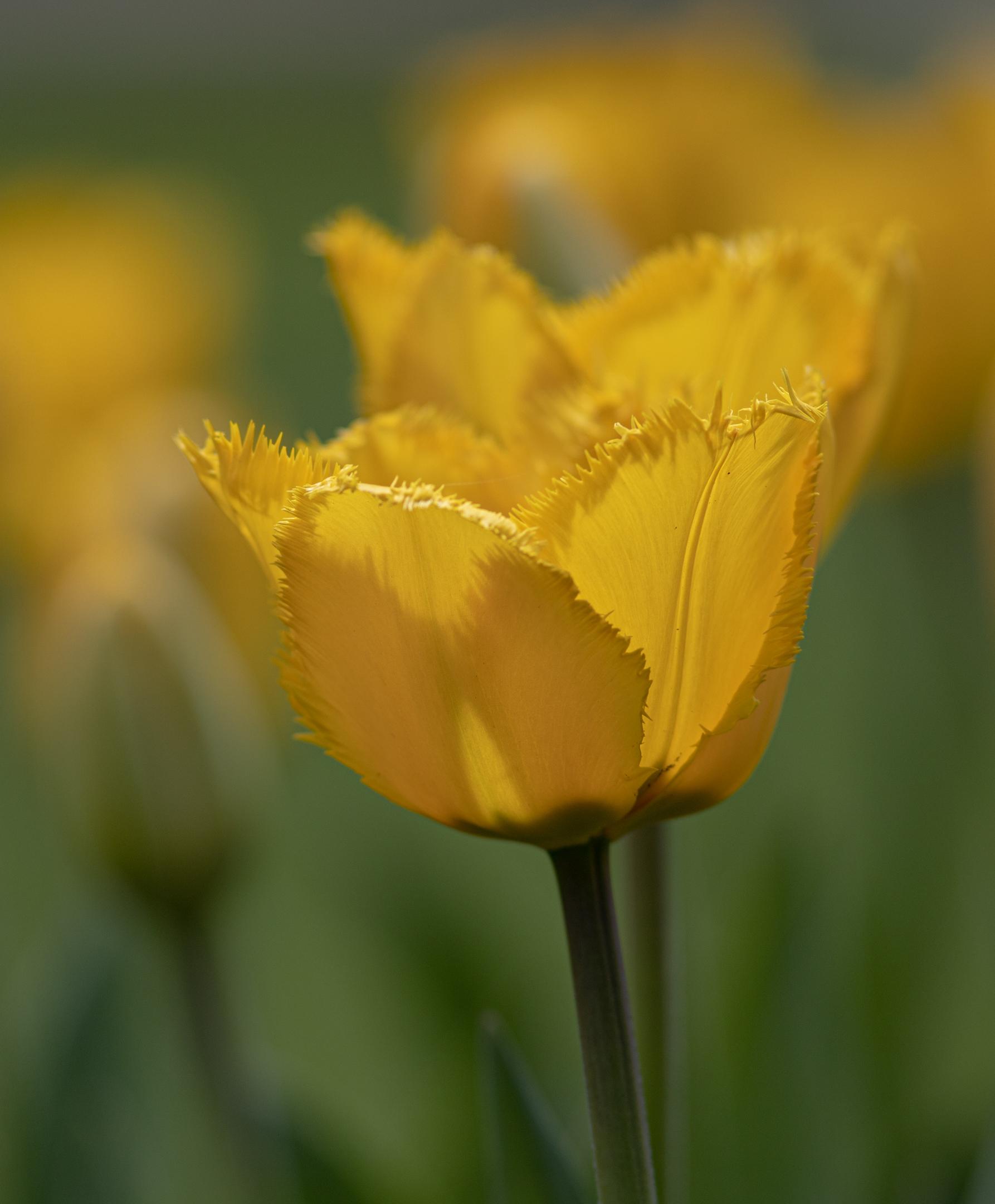 Giocare con Yellow.Tulips nel parco....