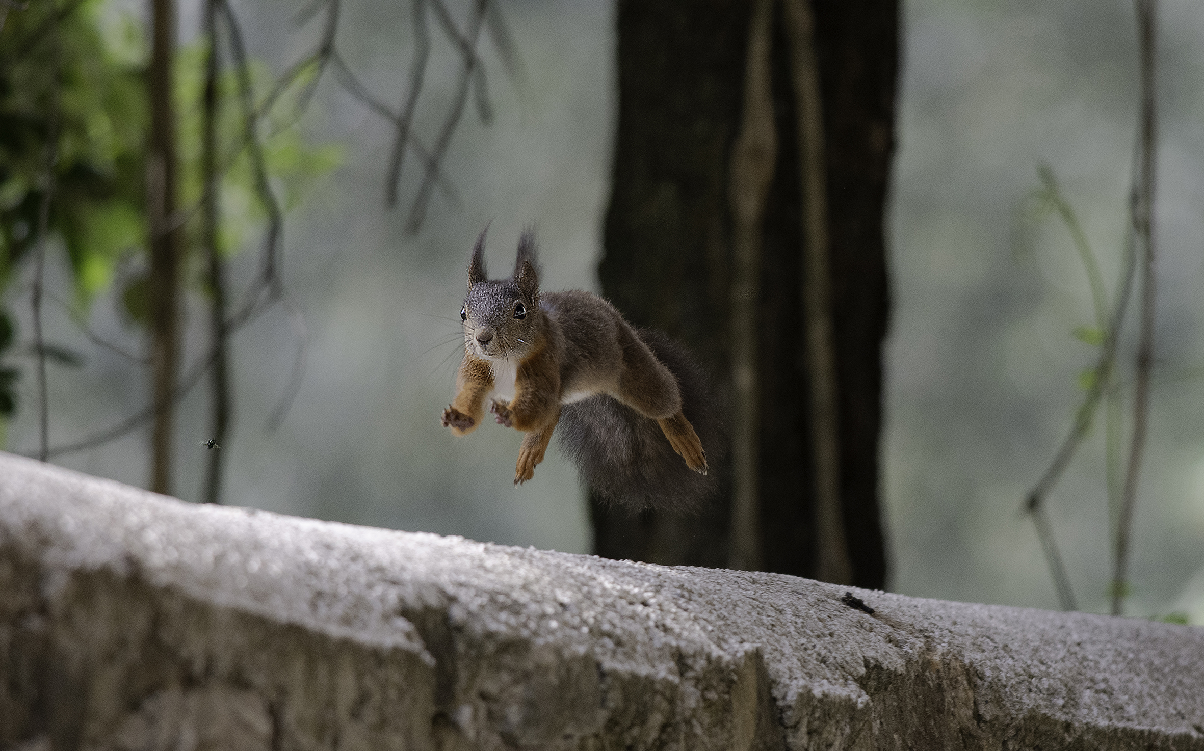 hasty squirrel...
