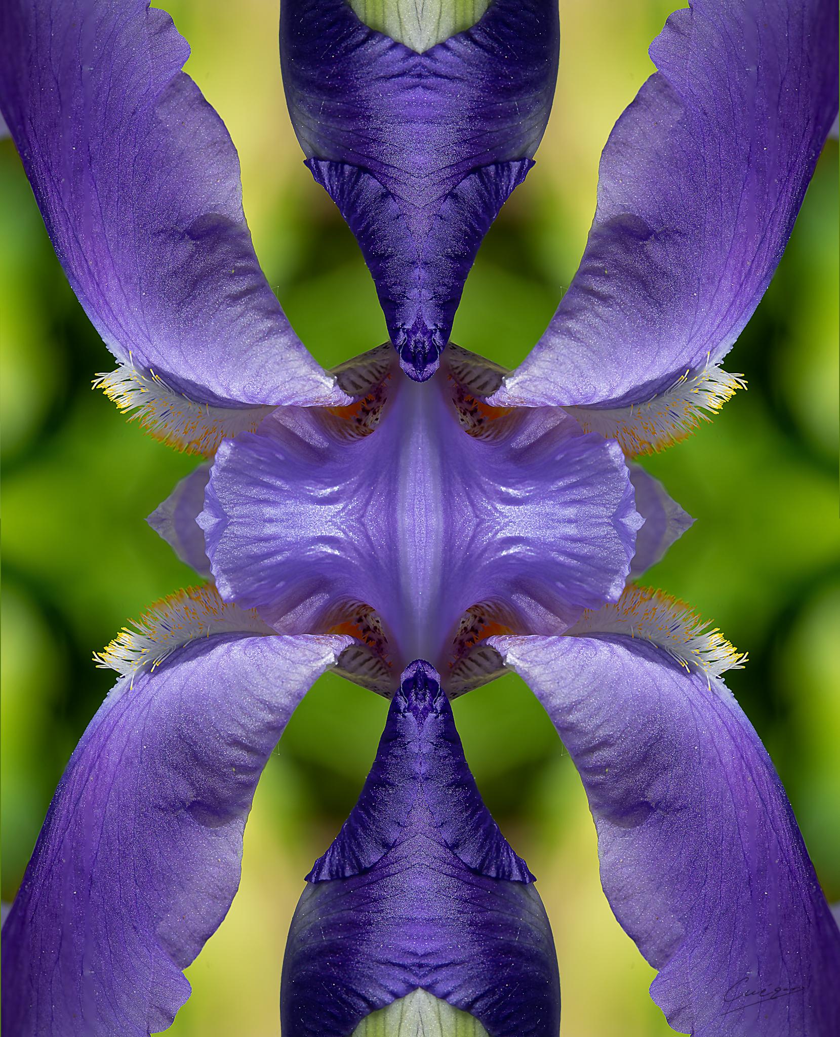 purple architecture...