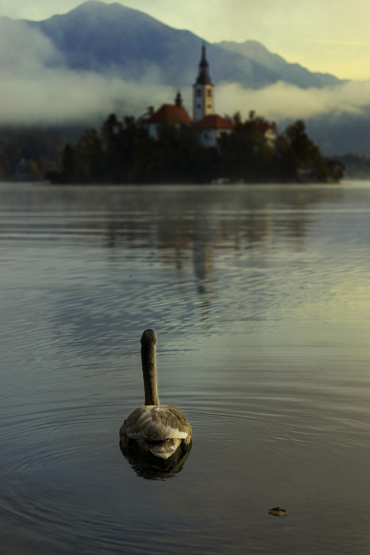 A look at the lake...