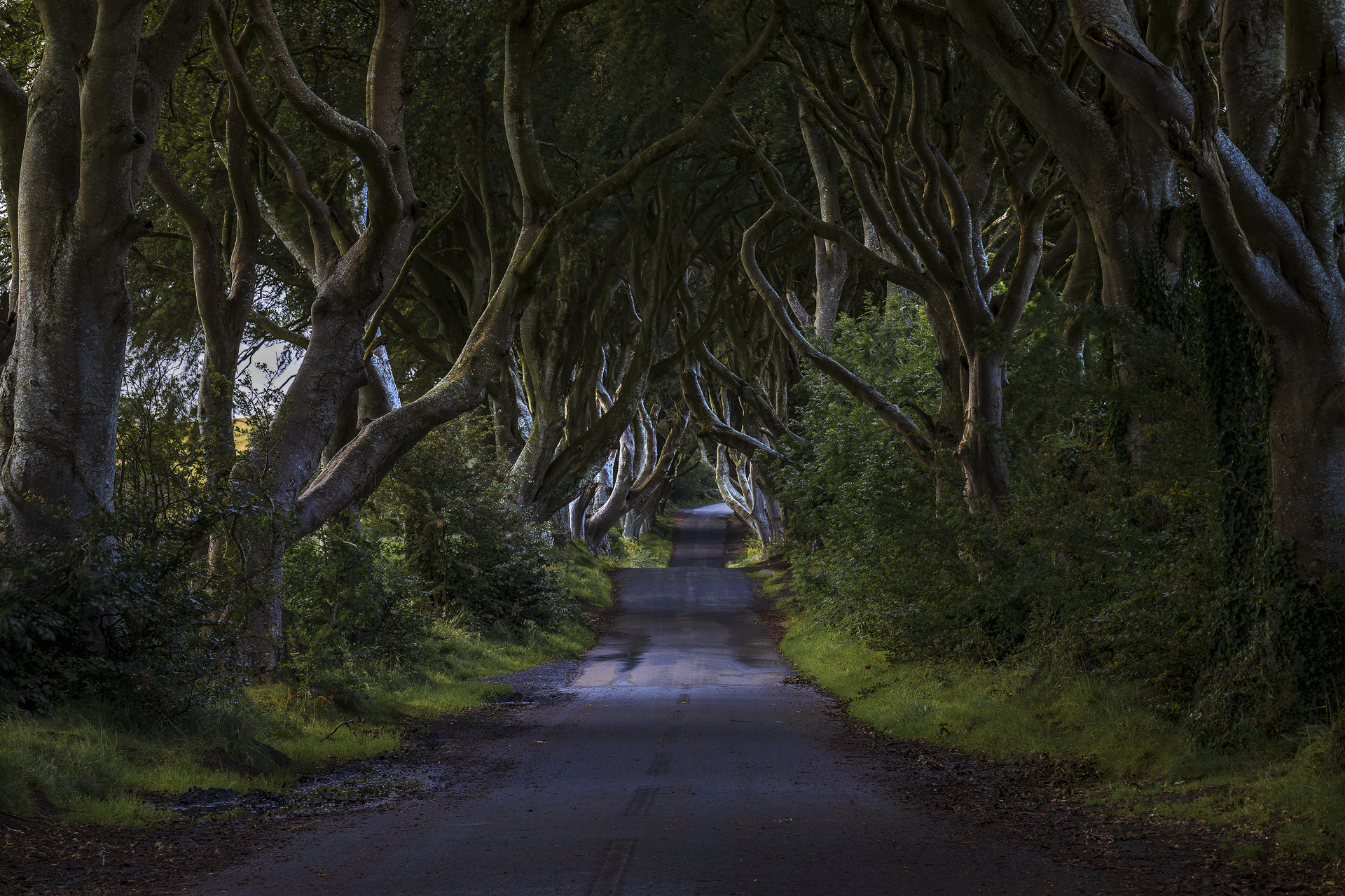 The Dark Hedges...