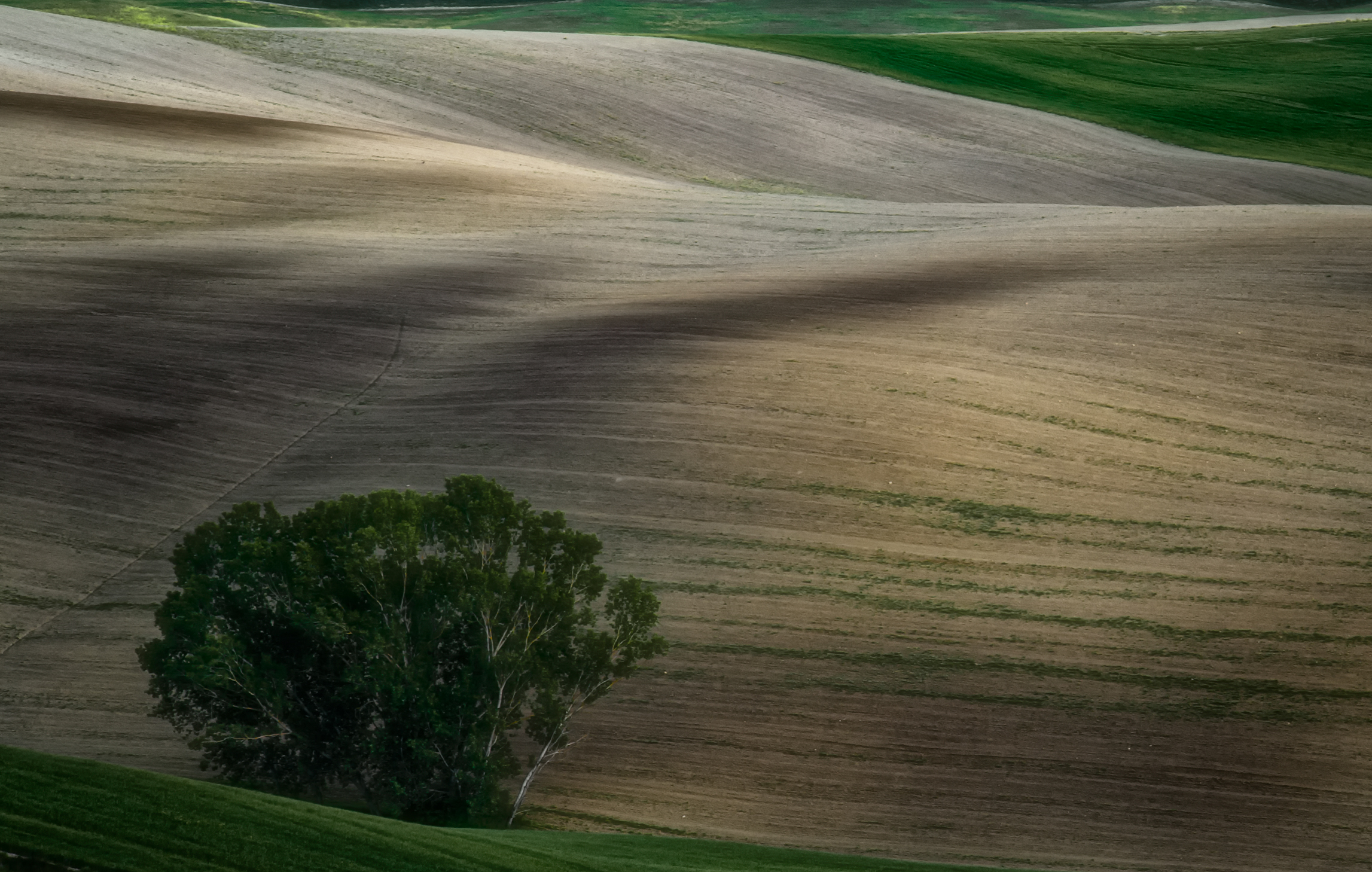 Shades in Val D'orcia...