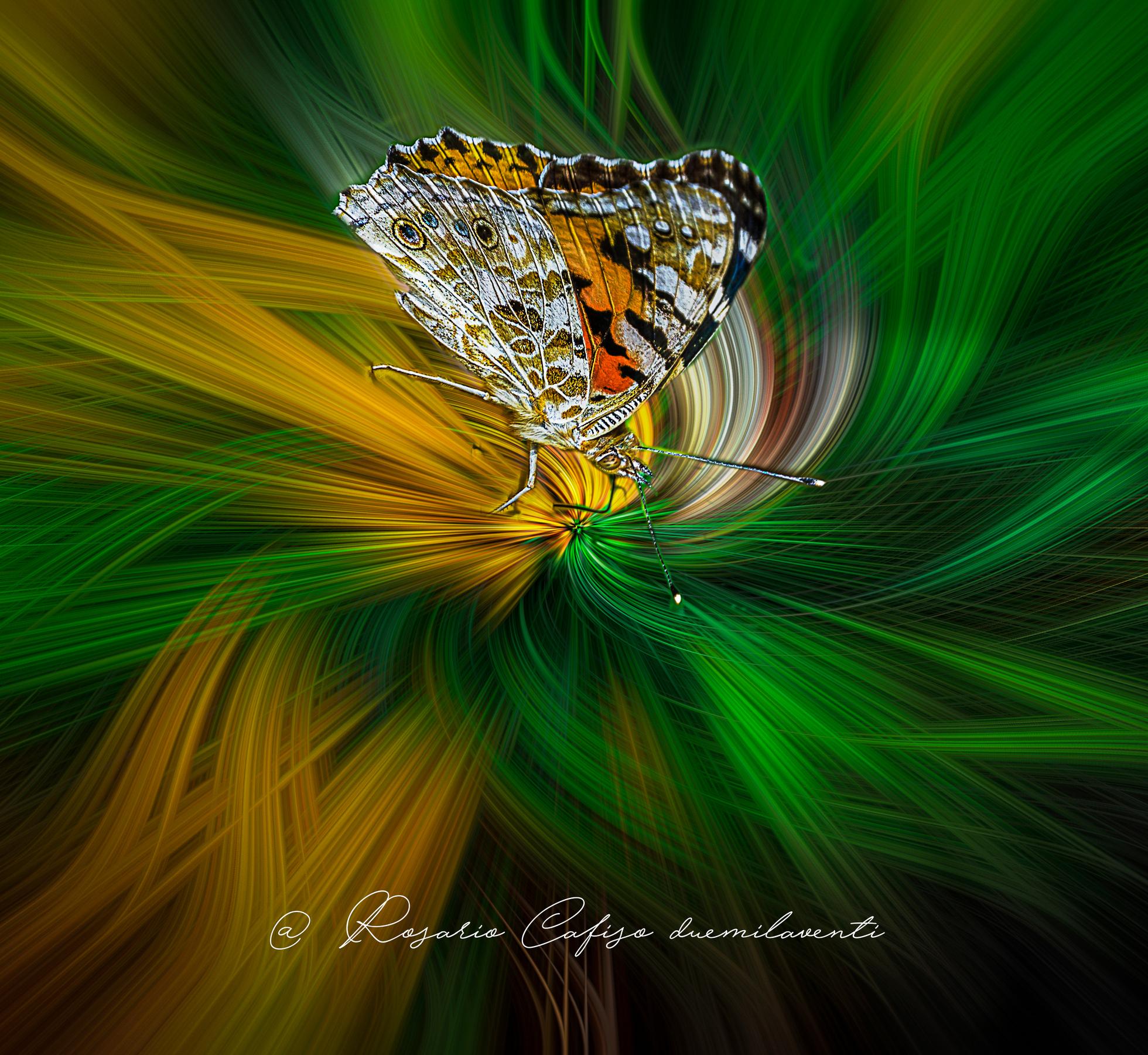 Twirl...... Butterfly...