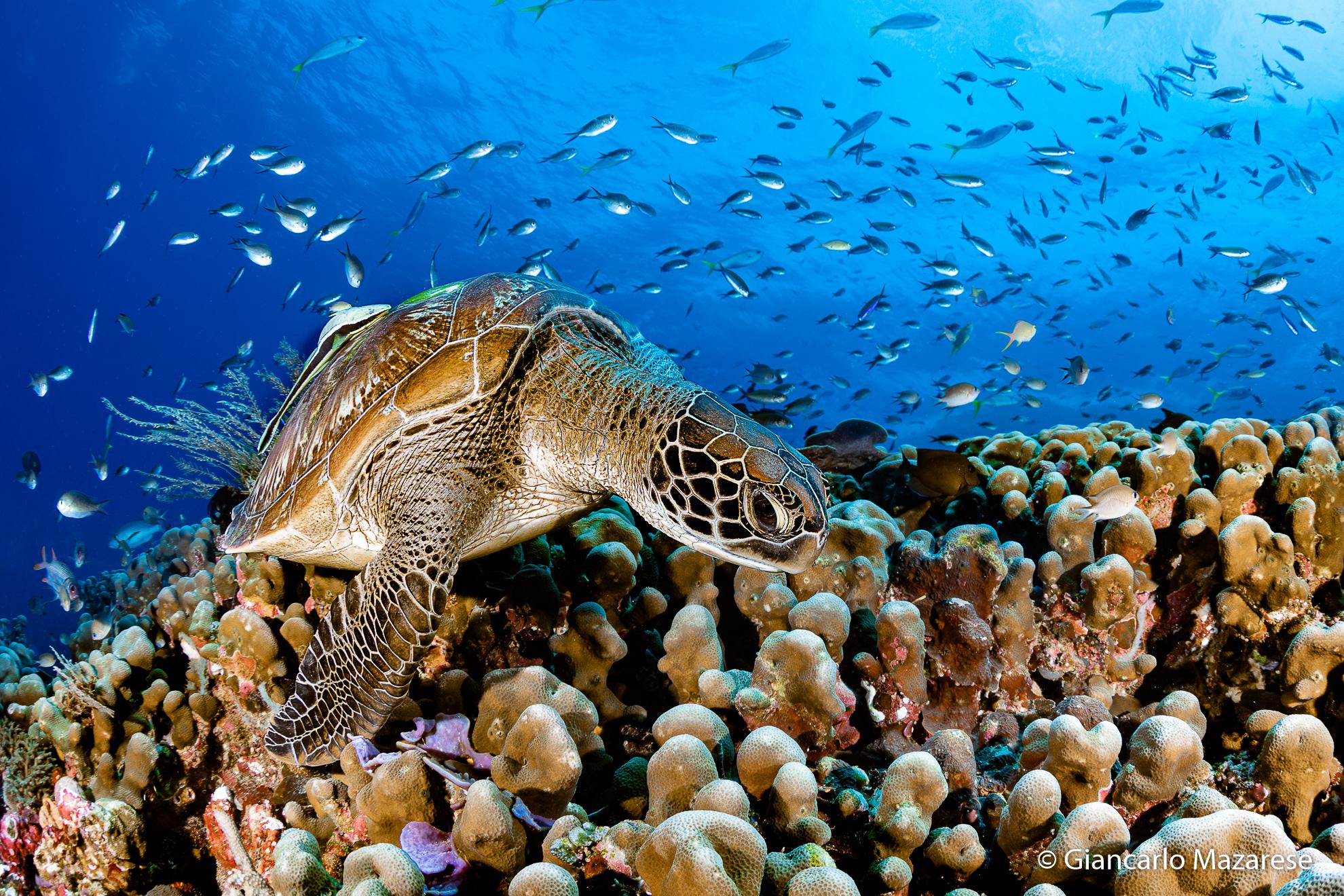 World Turtle Day...