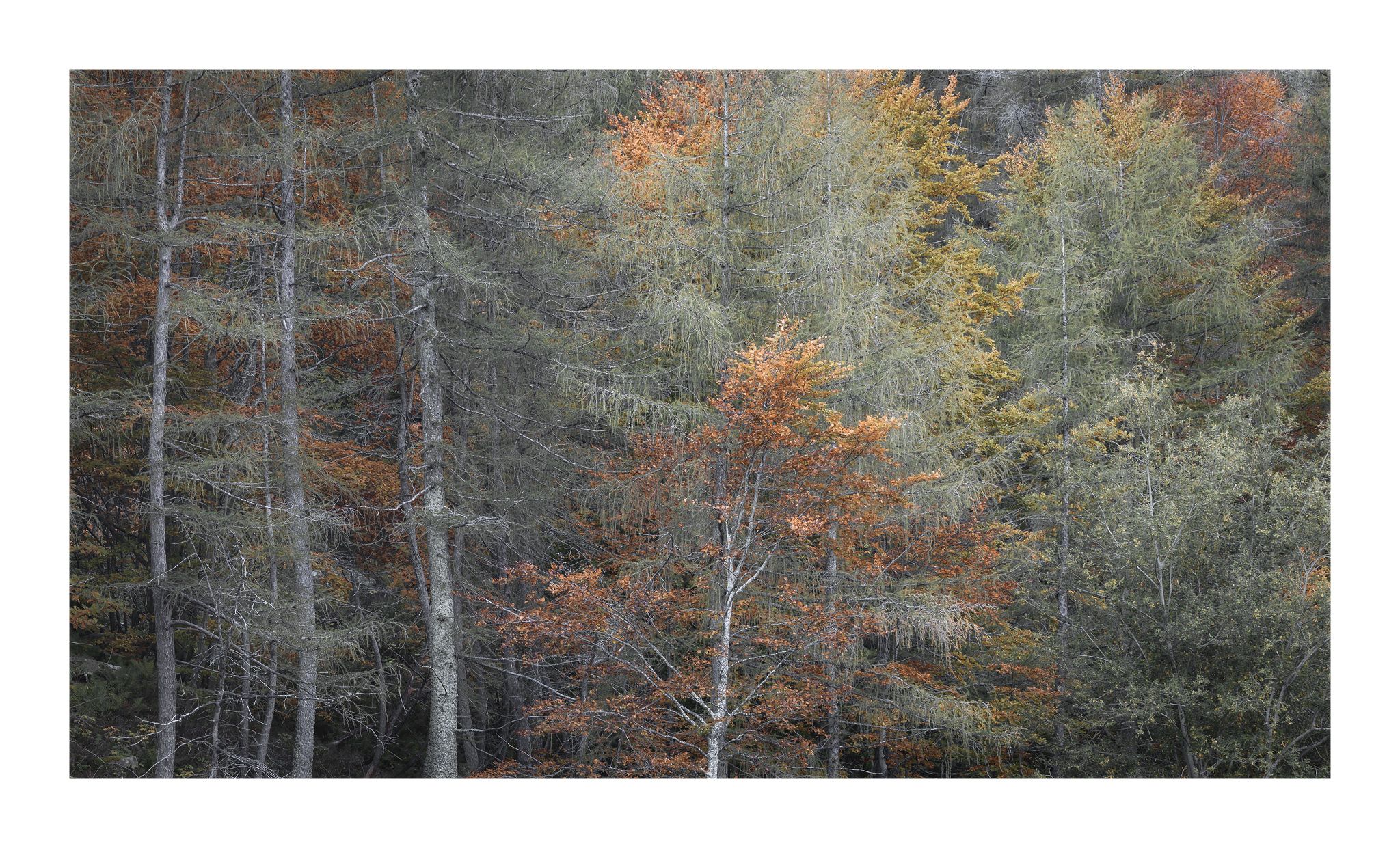 trees, detail...