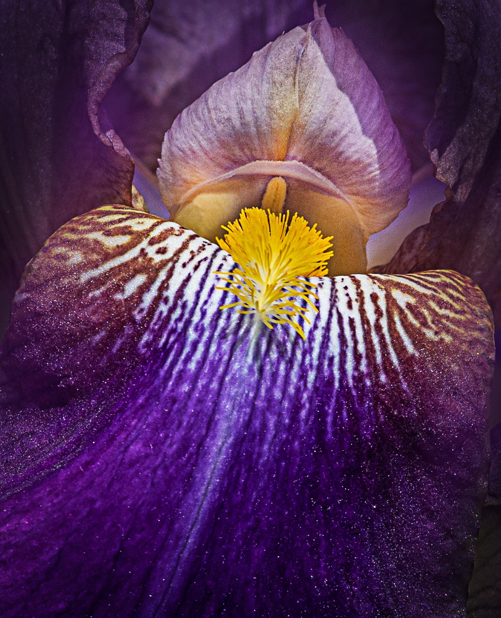 """The """"Iris""""Tongue...."""