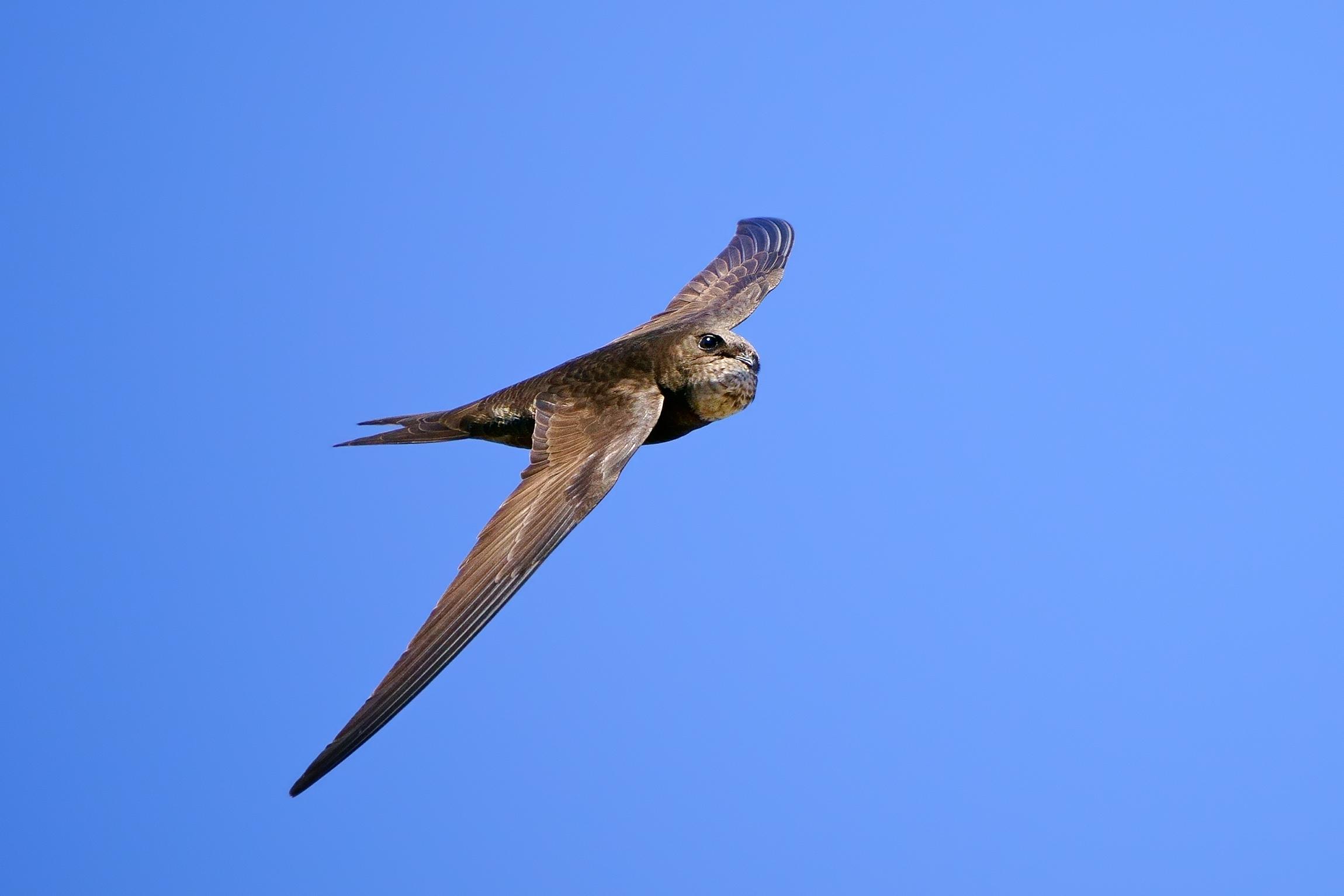 Swallow...