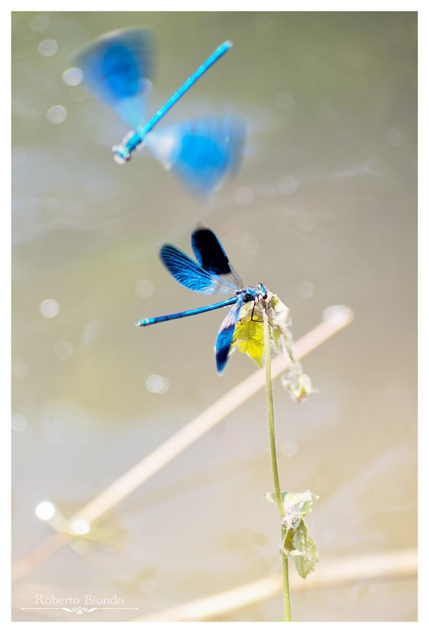 Blue Lightness...