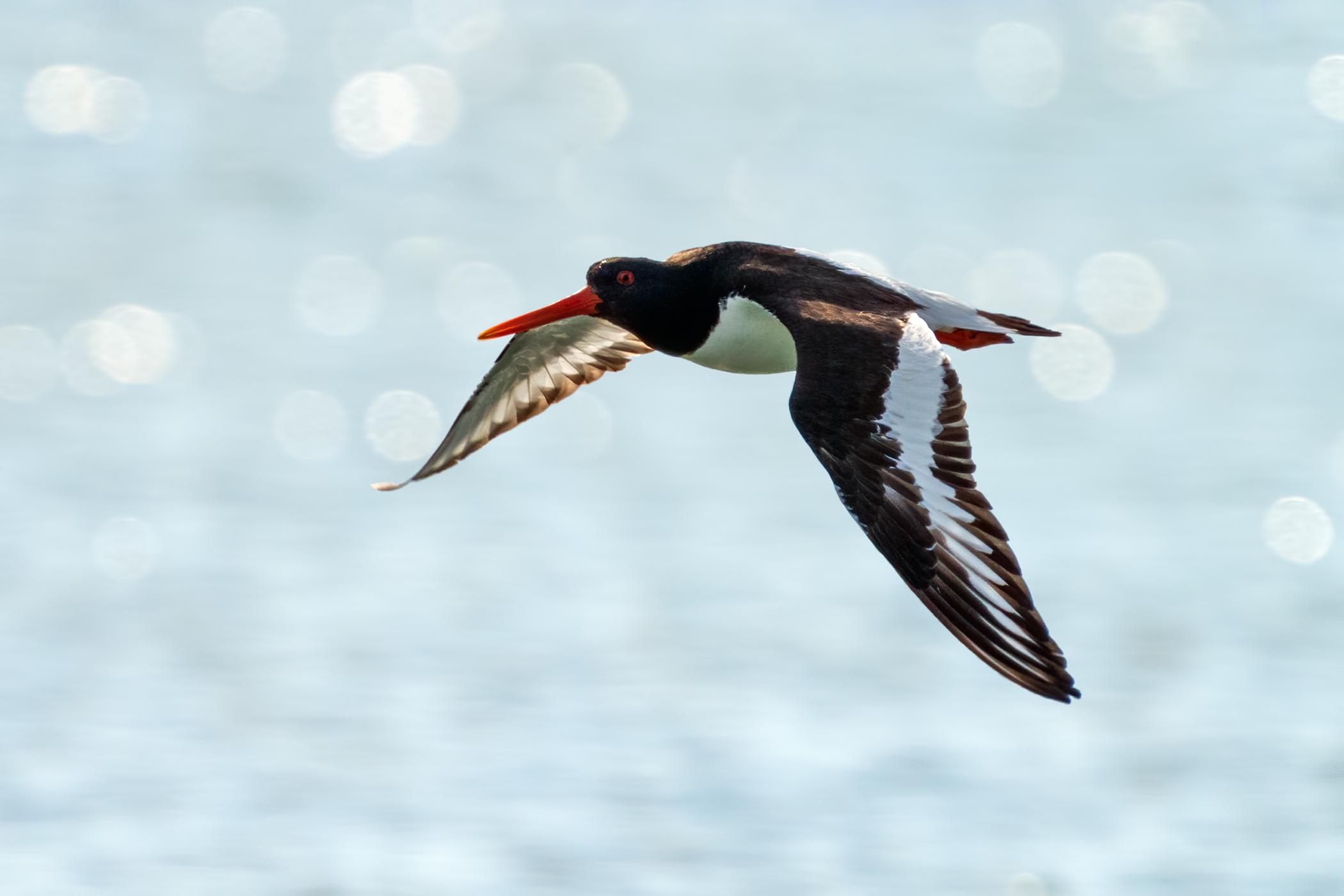 Sea beak - Controluce...