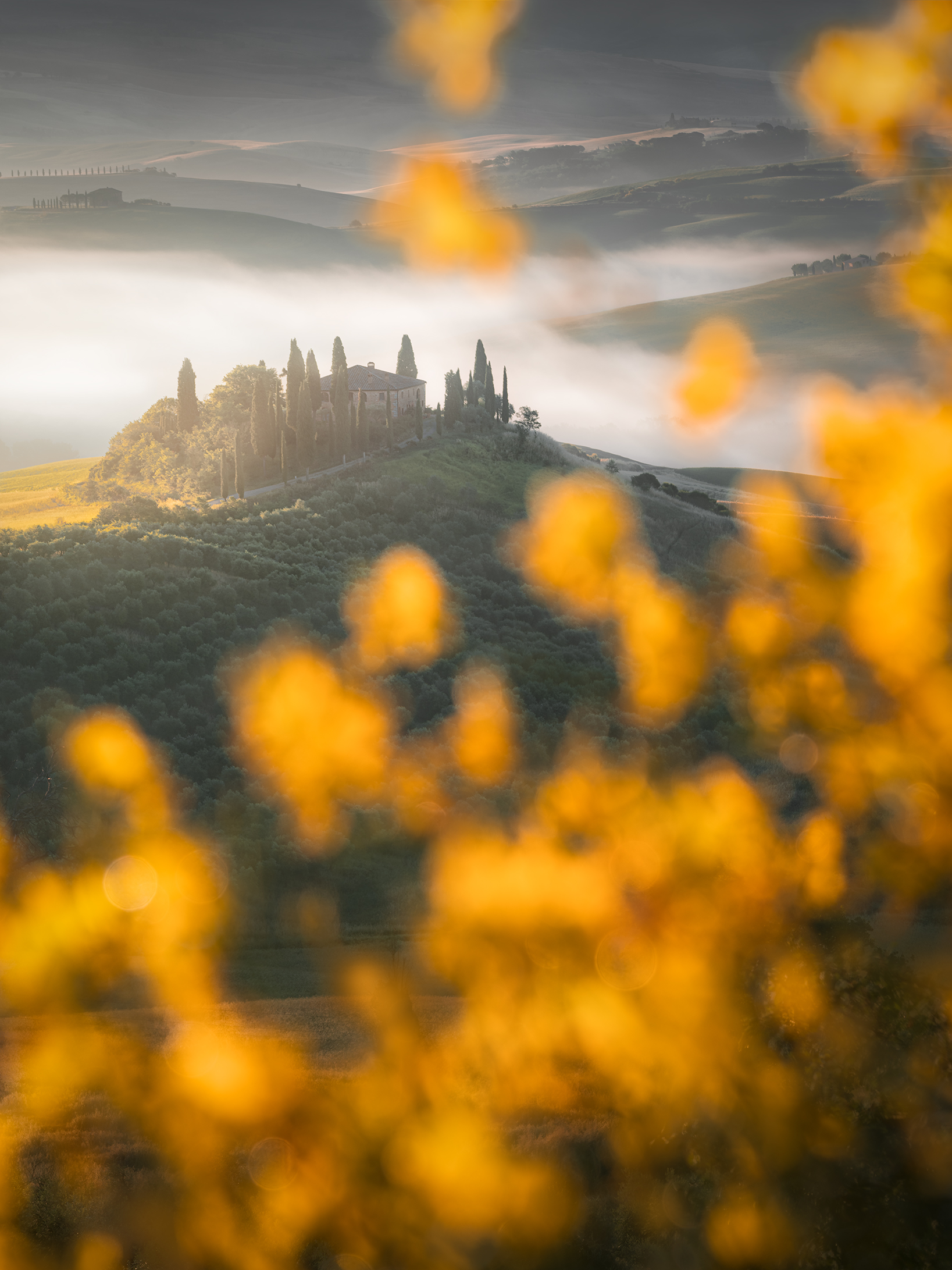 Ginestre in Val D'Orcia...