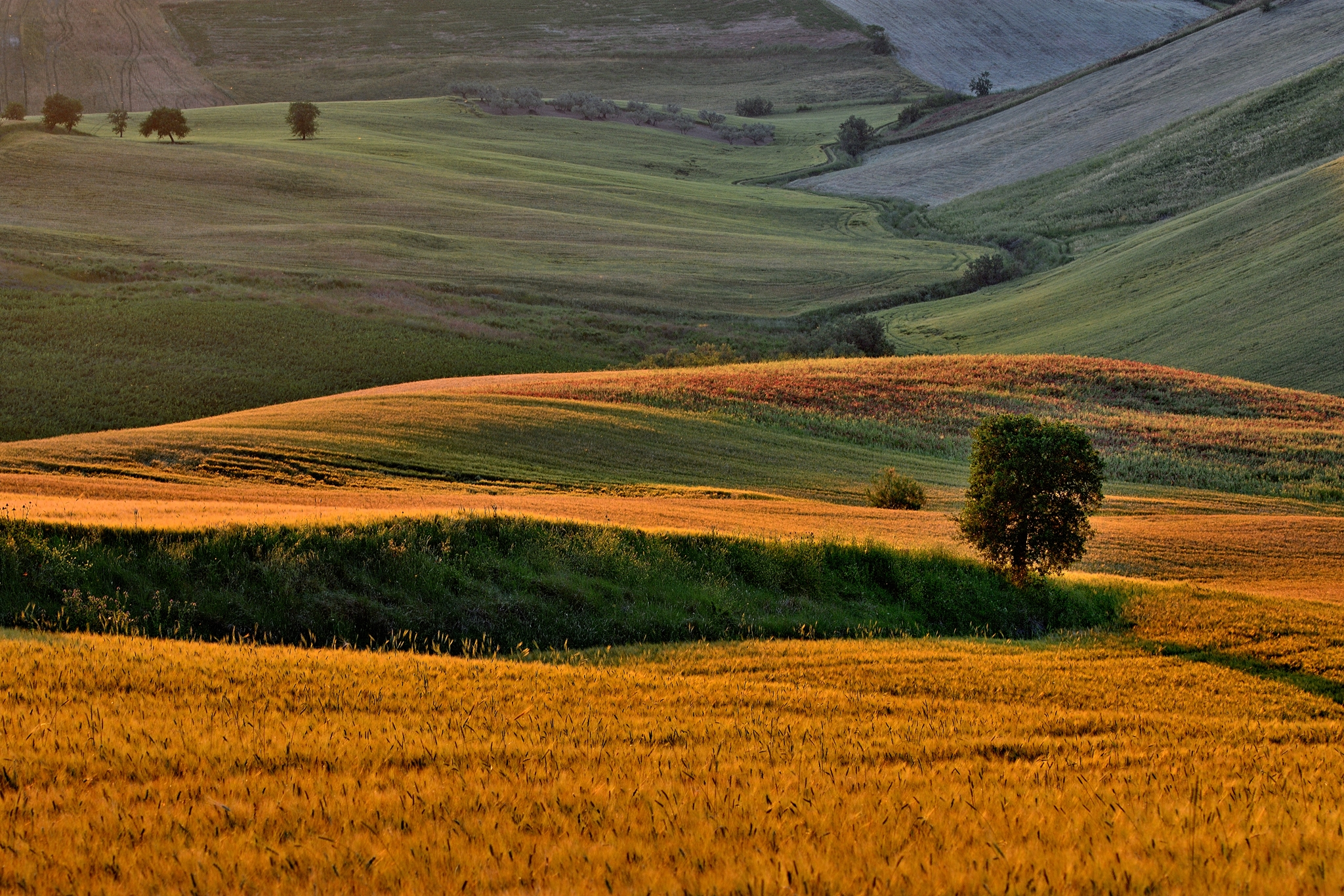Wheat and surroundings...