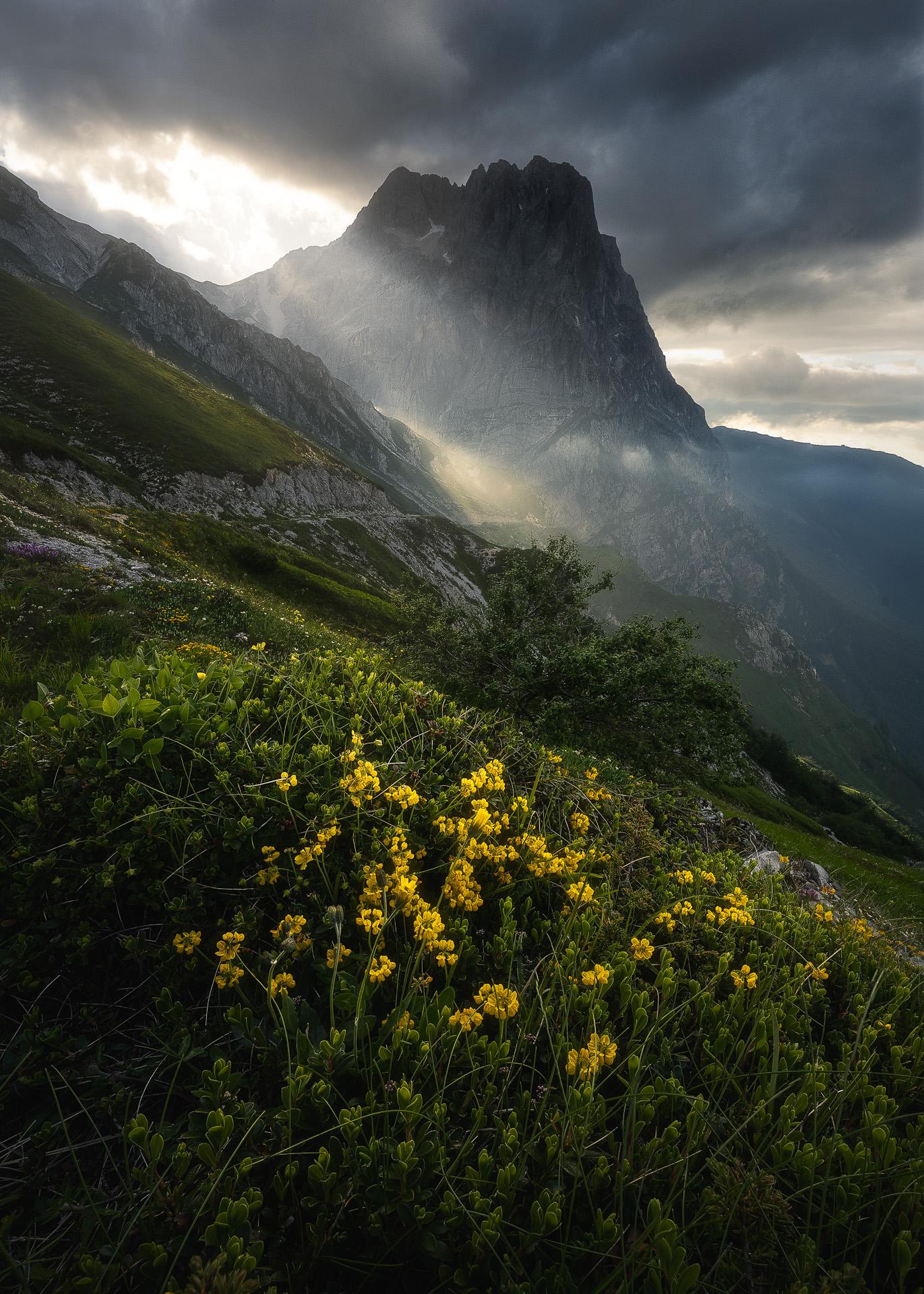 Wild Abruzzo, New...