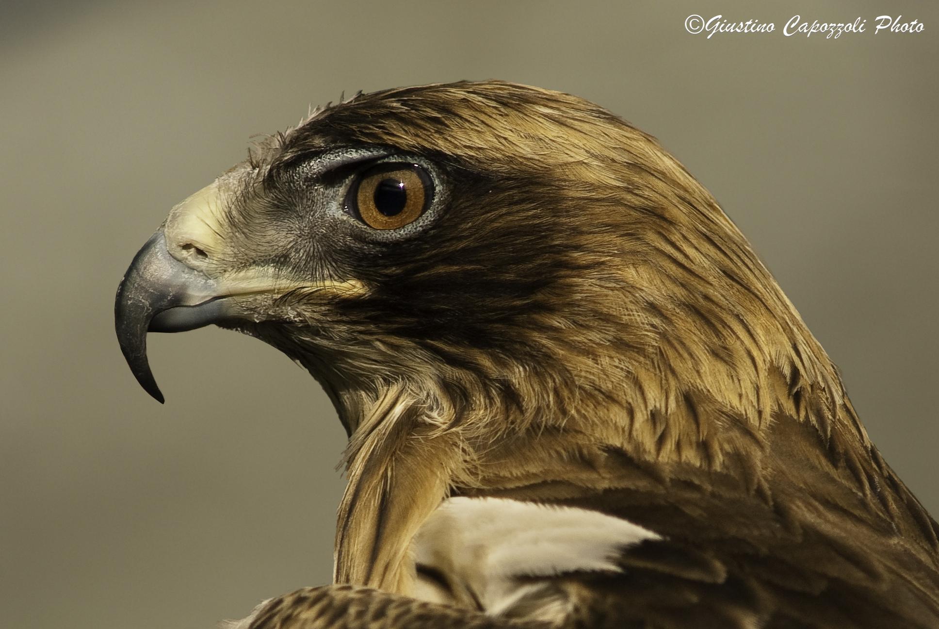 Little eagle...