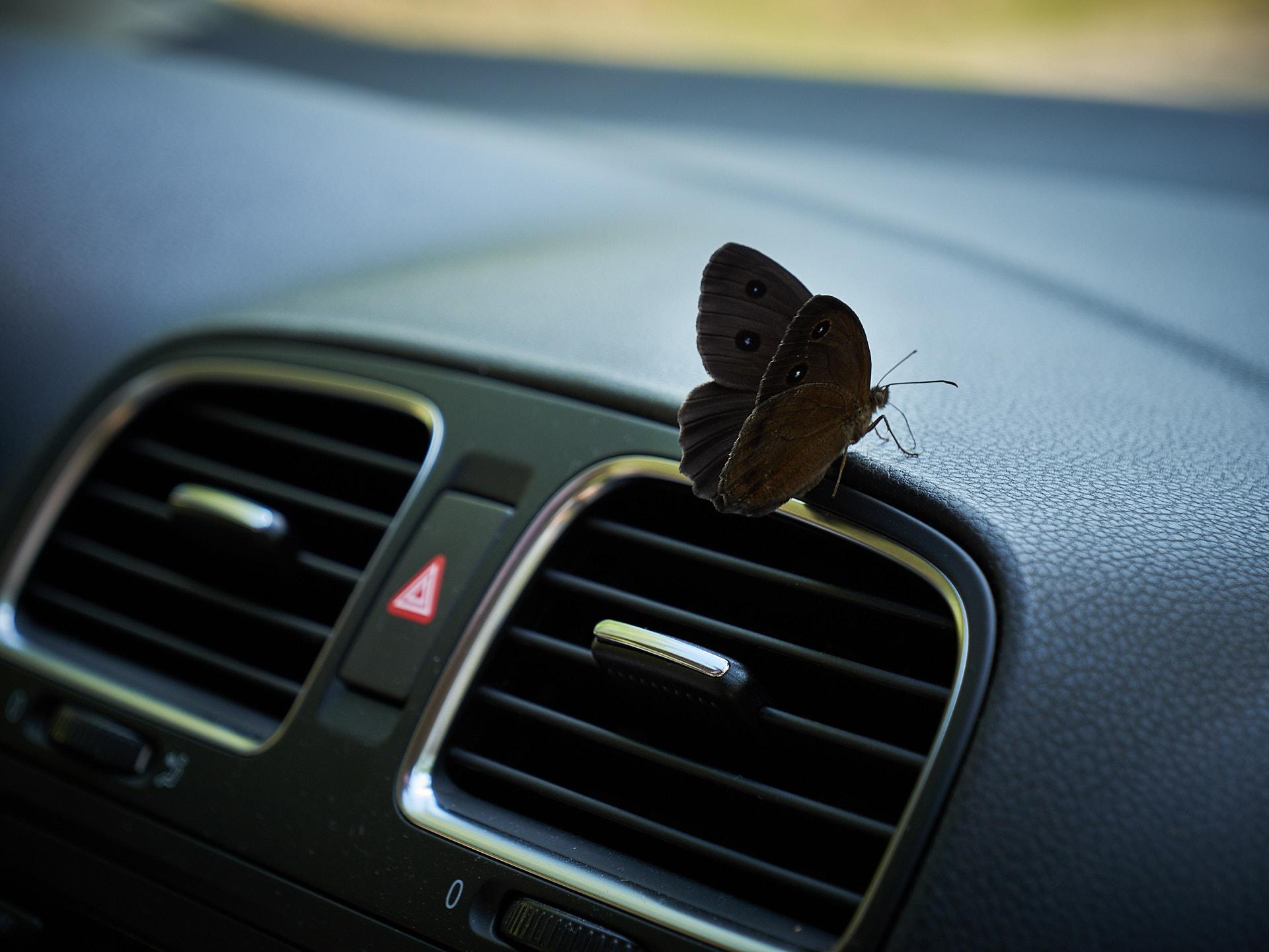 Farfalla Magique...