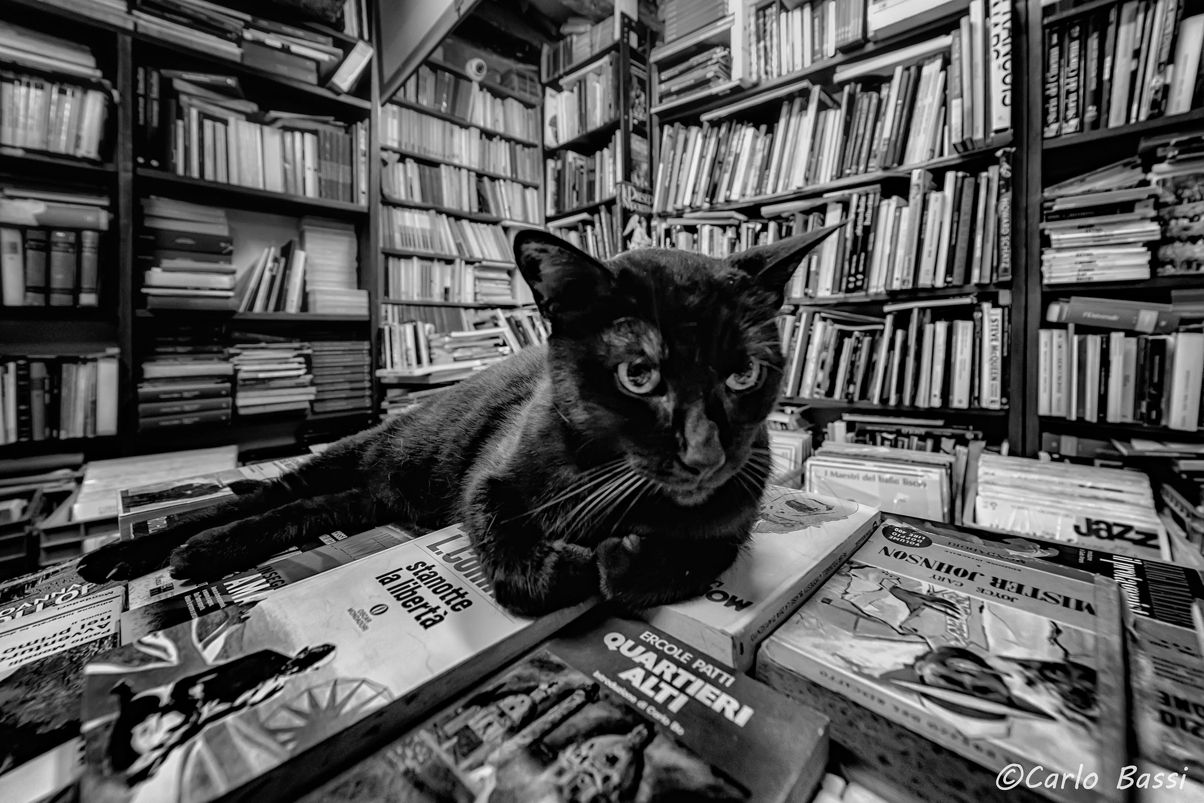 A particularly erudite cat...