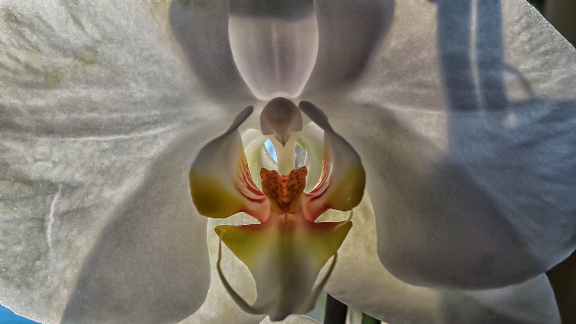 Orchid-...