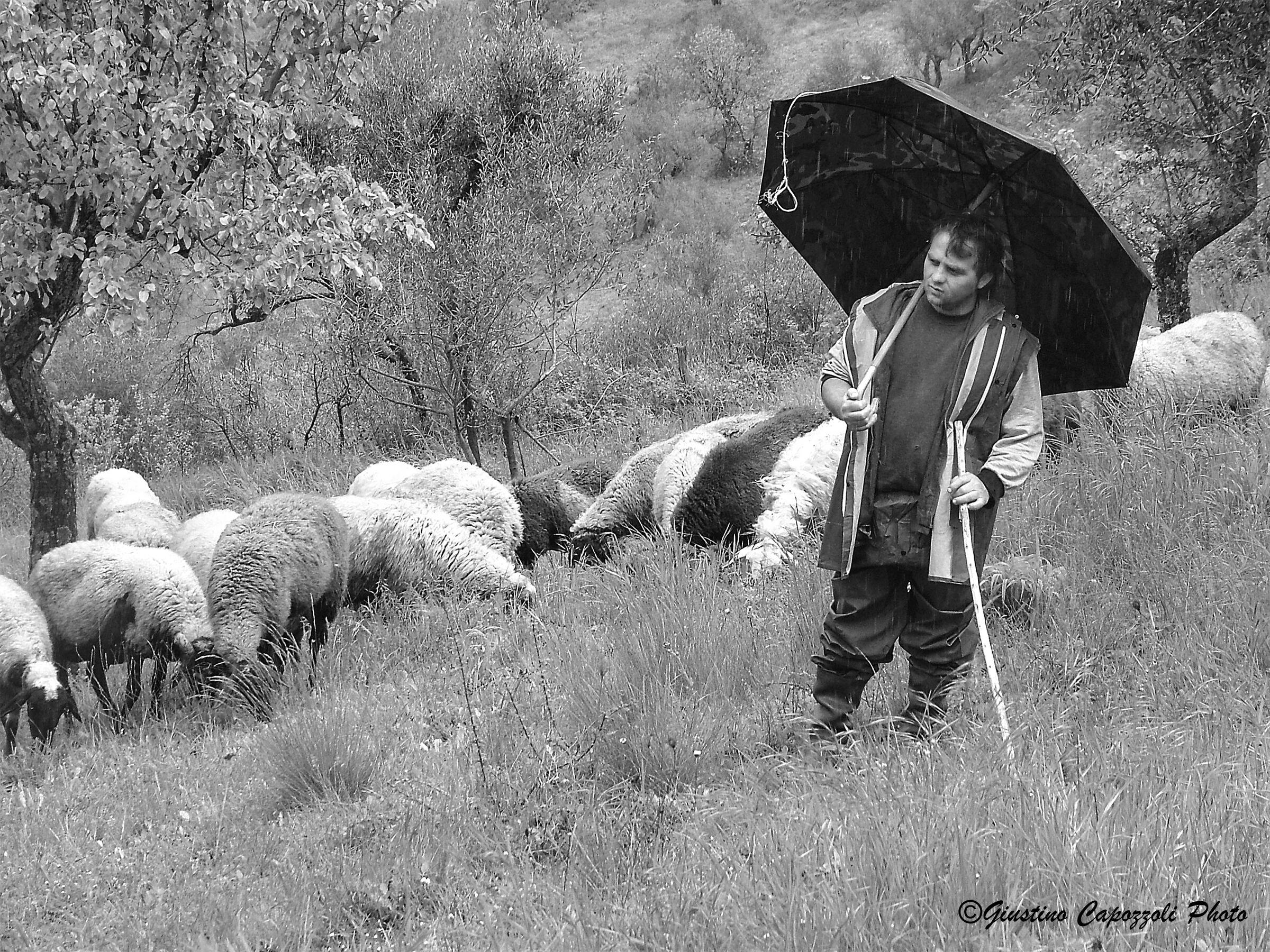 John grazing in the rain...