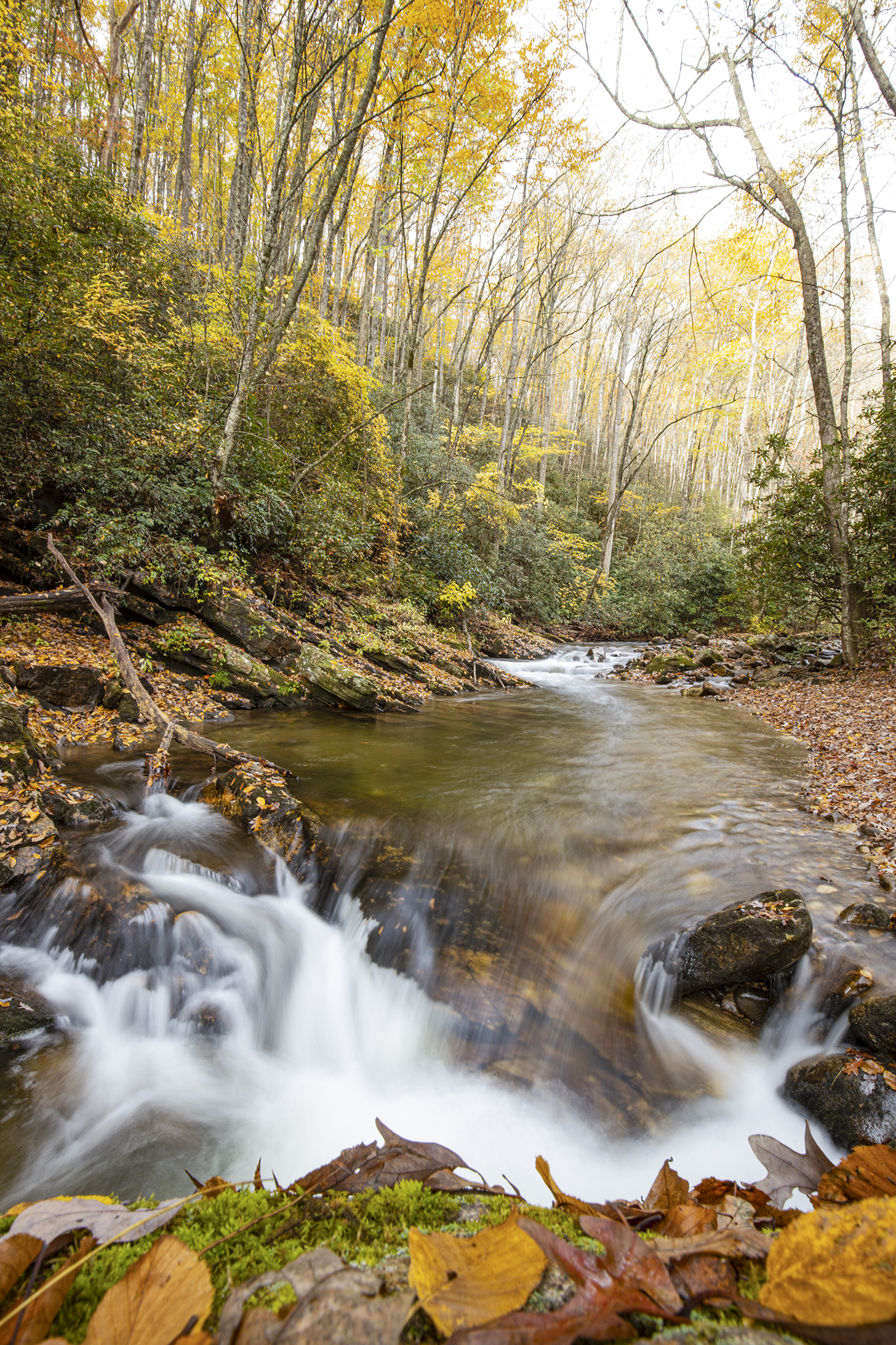 Pisgah National Forest...