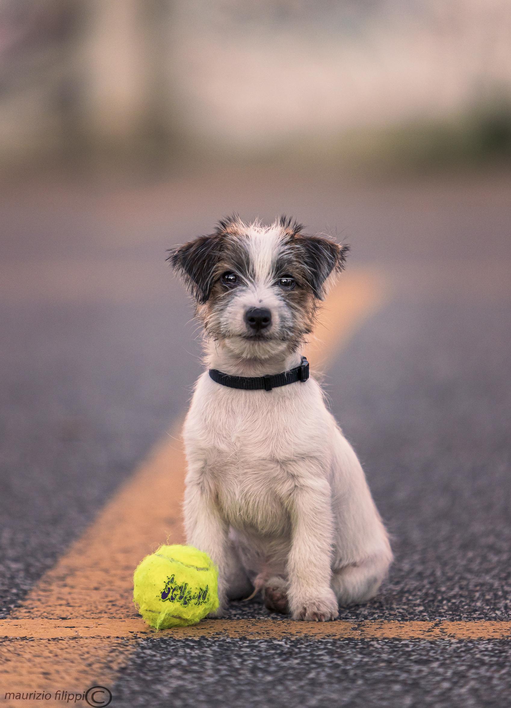 Play?...
